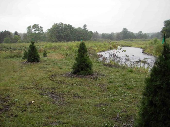 hersey_planting