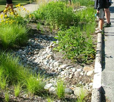 Curb-cut Rain Garden, Photo by Plaster Creek Stewards