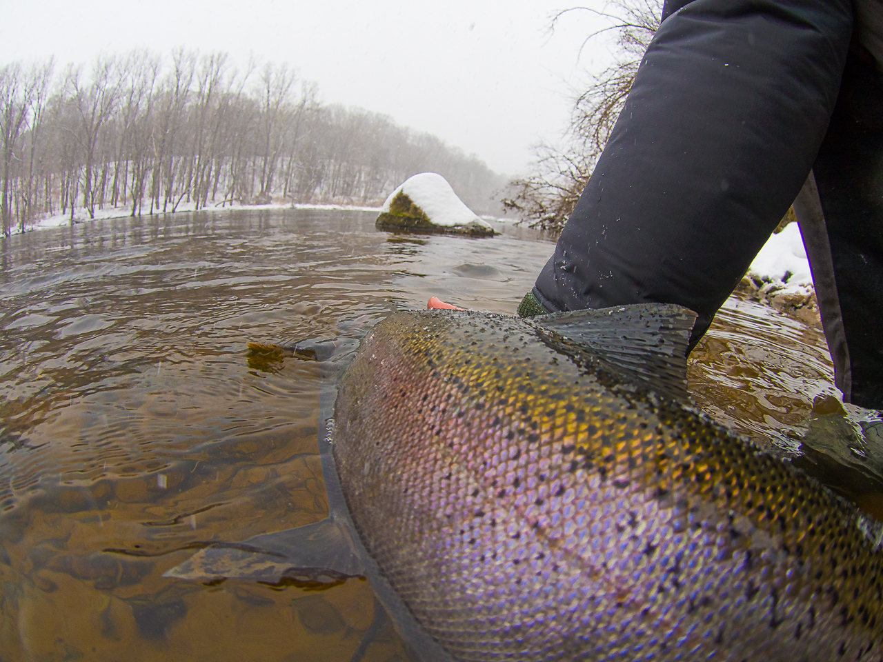 Winter Steelhead Fishing—A Great Way to Enjoy the Muskegon